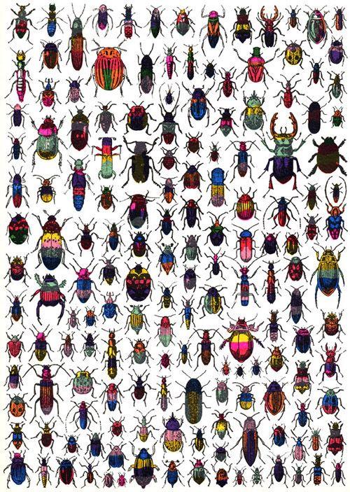 dilnot beetles