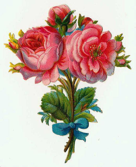 pink roses, blue bow