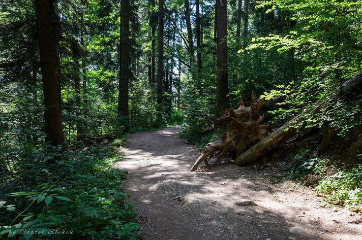 Bucegi Forest