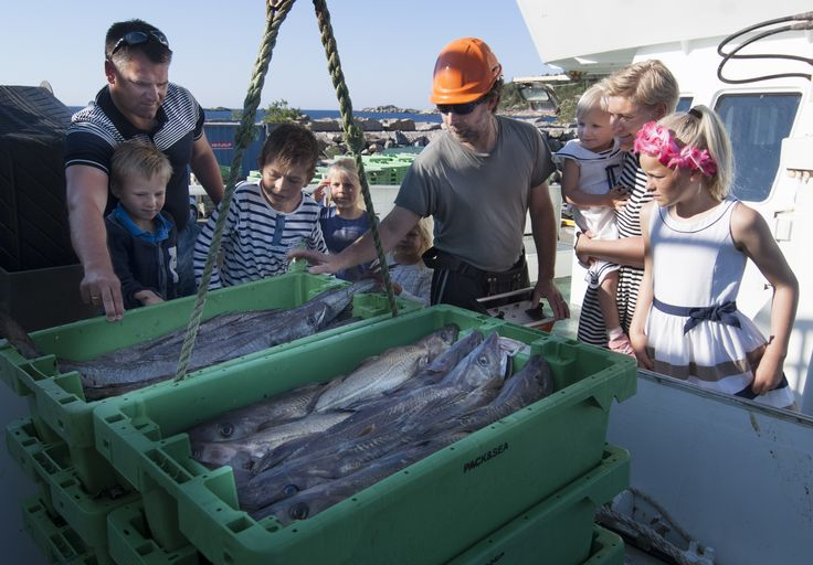 Taste your way through the different regions of Southern Norway. Here are some fresh fish arriving the harbour in Båly, Southern Norway. Read more: https://www.visitnorway.com/places-to-go/southern-norway/taste/?lang=primary