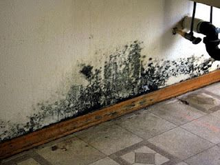 Mold is known as a dwelling person, comparable inside natural world in the direction of infection such as mushroom,