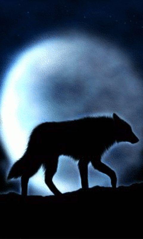 Free Moving Wolf Screensavers Moon Wolf 480x800 Free