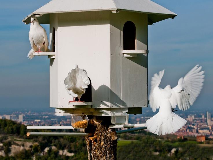 colombe  dove cote / wedding destination