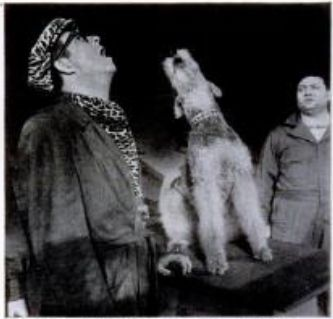 "Top Banana was a 1951 musical comedy w/ Phil Silvers, The show featured acts like a duet in which Silvers and an Airedale Terrier crooner named Ted (Sport) Morgan performed the showstopper, ""A Dog is a Man's Best Friend."""
