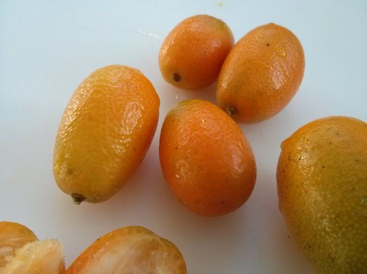 Kumquats - The no-need-to-peel citrus fruit plus bonus how to grow Kumquats from seed
