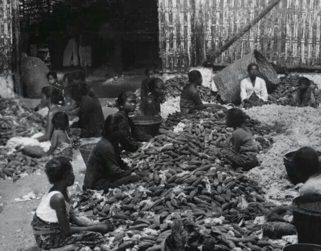 Para perempuan sedang mengupas kapuk, 1910  Foto: Onnes Kurkdjian