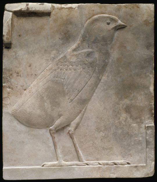 Relief Plaque Depicting a Chick  Egyptian  Ptolemaic Period    Source: Art Institute of Chicago