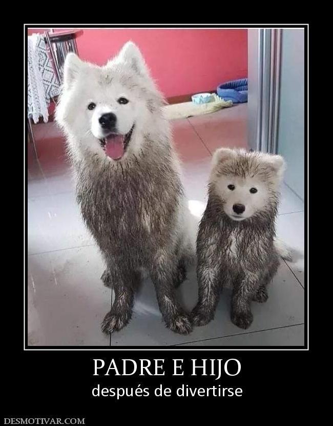 Padre E Hijo Despues De Divertirse Cute Animals Happy Dogs Cute Dogs