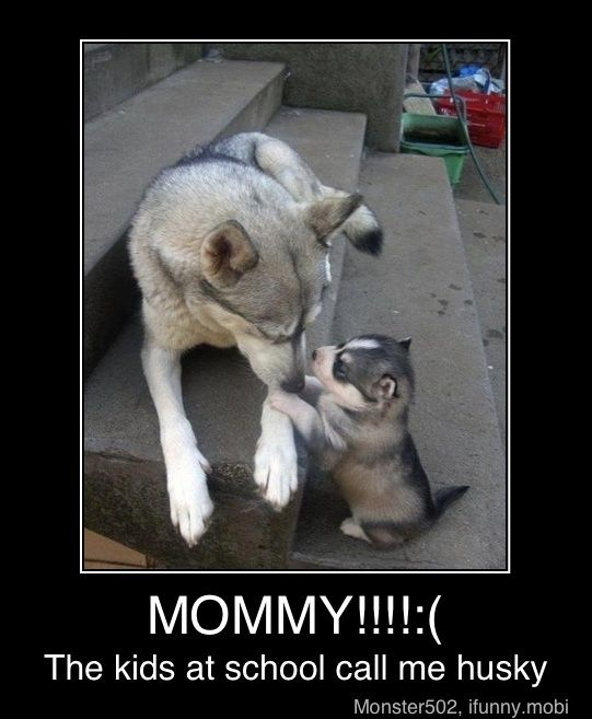 Puppies, Dogs, Sweets, Pets, Husky, Adorable, Baby, Mom, Animal