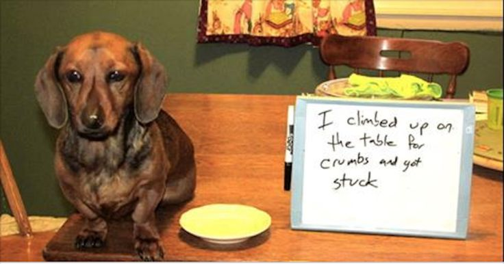 15 Signs You're A Crazy Dachshund Person… and Damn Proud To Be!