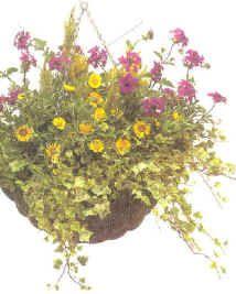 Balkonplanten - éénjarigen - tweejarigen - perkplanten