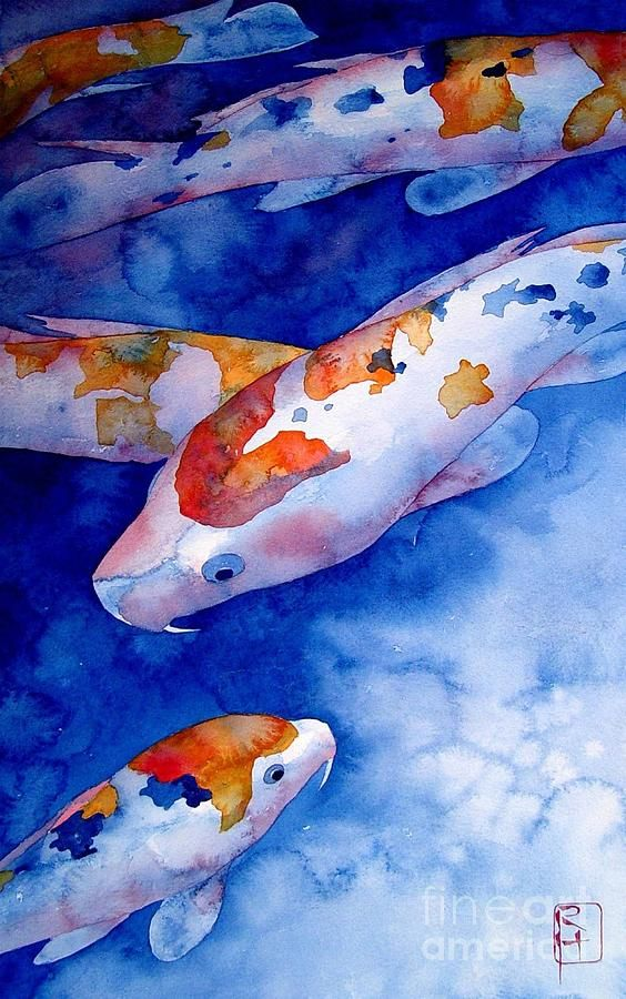 25 best ideas about koi painting on pinterest koi carp for Koi fish for sale