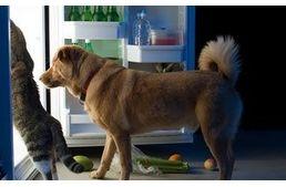 A konyha nem kutyabarát hely! - Hírek #dog #kitchen #konyha #kutya #poison #méreg #kutyabaráthelyek
