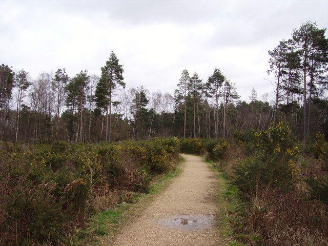 Elvetham heath nature reserve