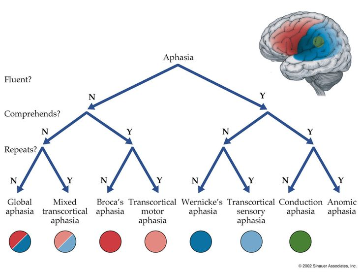 Este esquema, tomado de Blumendfel (2011), es muy útil a la hora de diferenciar distintos tipos de afasias en la práctica clínica. Considera las variables de fluidez, comprensión y repetición y ade…