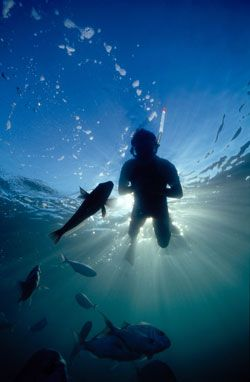 Welcome to Goat Island Dive & Snorkel | Auckland PADI Dive Courses | Snorkel Goat Island