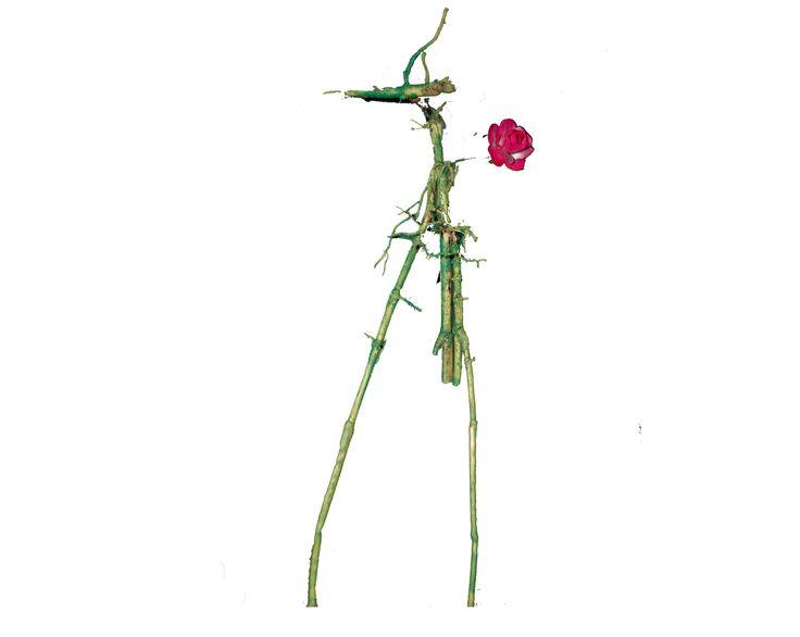Wandelende tak, bamboewortel, papieren roosje