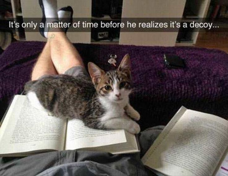 Funny, Memes, Pictures: funny-animals-5-14-1