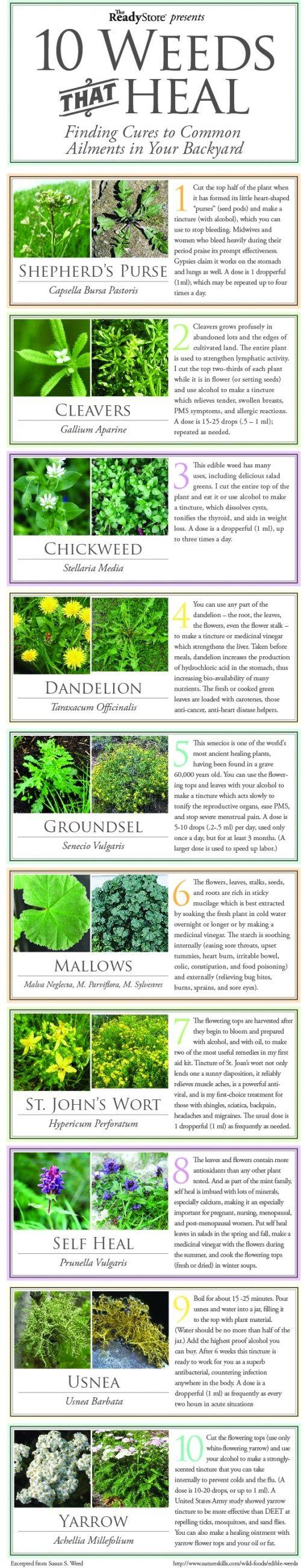 10 Weeds that Heal big