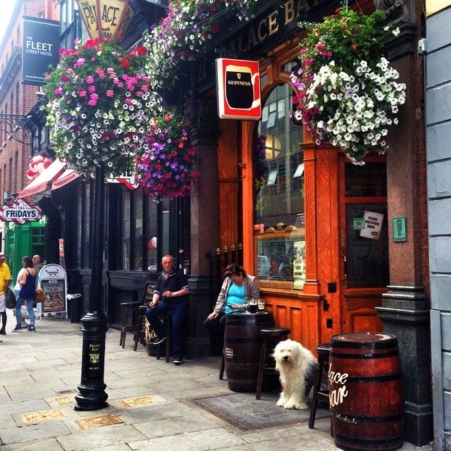 Happiest dog at the bar! Wonderful bar in Dublin and where I tried my first Guinness - YUMMMY.