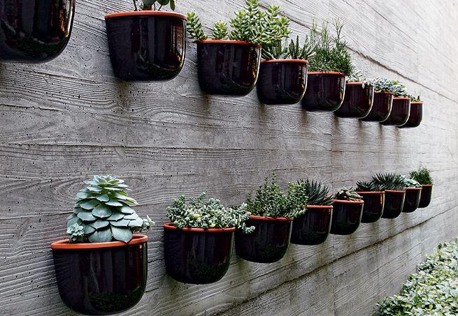 jardim vertical + suculentas