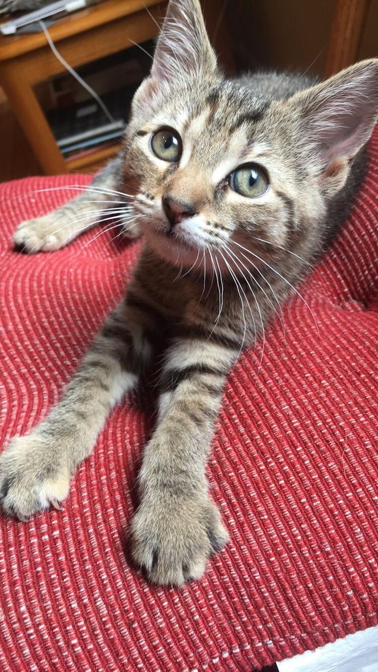 Picked up this little booper at the humane society today. http://ift.tt/2tKvJJR