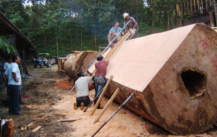 1000 images about Cutting wood slab on Pinterest   A tree A well and