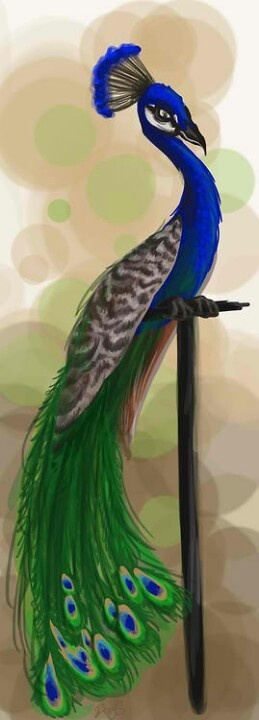 Peacock art..artist unknown