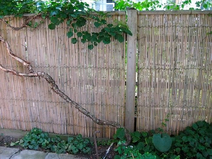 10 Easy Pieces Instant Fencing Garden Design Pinterest Fence Bamboo And Backyard Fences