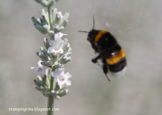 stamping rika: bee on white lavender
