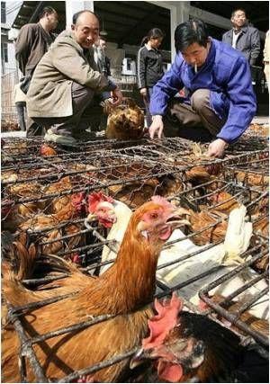 Bird Flu Death Toll Hits 16 in China