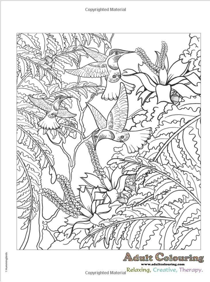 Coloriage Amazon AnimalsColoring BooksHidden PicturesTwistsDrawingsColoring Fowl