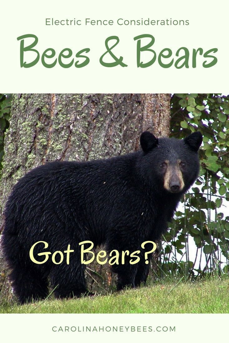 Using Electric Fences For Bears To Protect Your Bees Electric