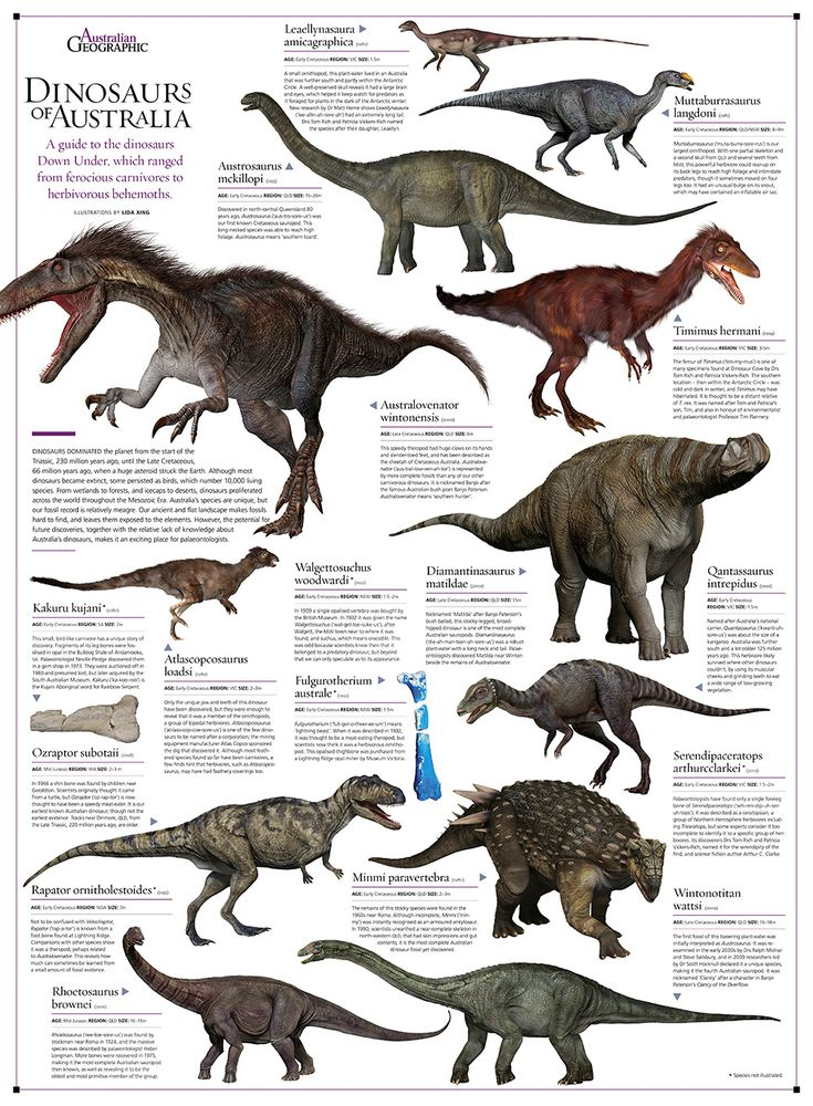 Taking a journey to that Dinosaurs Era. In the outback of Australia, you would encounter these beasts