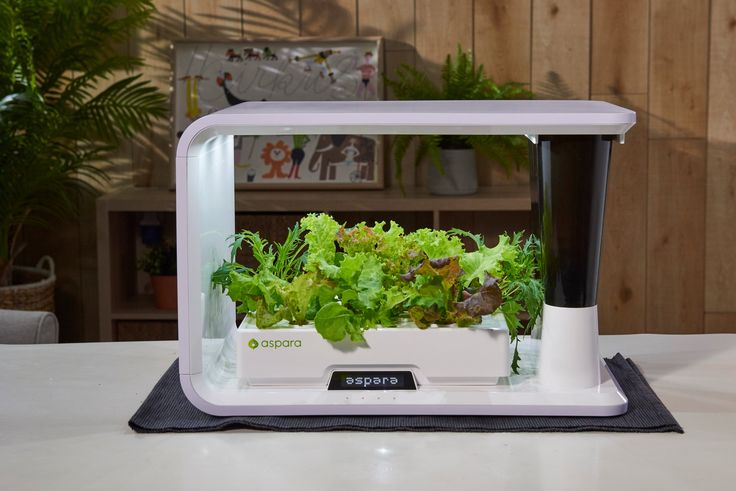 Aspara™ The Smart Indoor Garden 640 x 480
