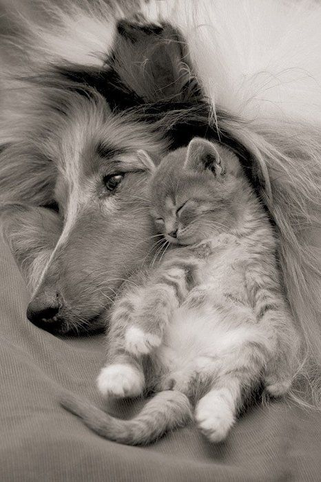 And people thought cats and dogs didn't get along...
