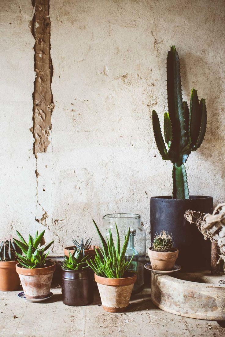 #cactus #plants http://www.lovelylife.se/