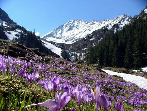 spring in the mountains - spring Photo