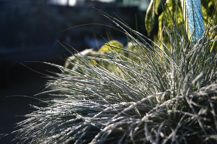 Striking foliage plants make for winter garden interest.