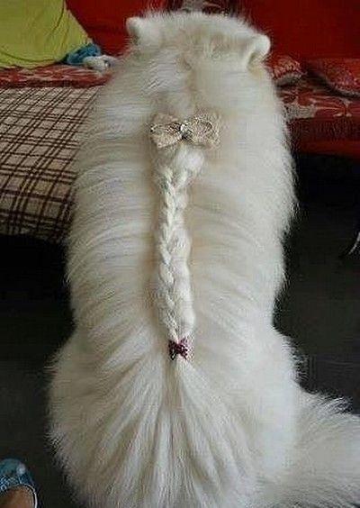 Good French Dog Manes