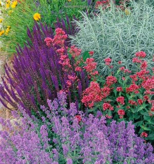 Great color combo for full sun:  Coreopsis (yellow)  Salvia nemorosa (deep purple)  Centranthus (pink)  Nepeta (lavender)  Artemesia? (grey)