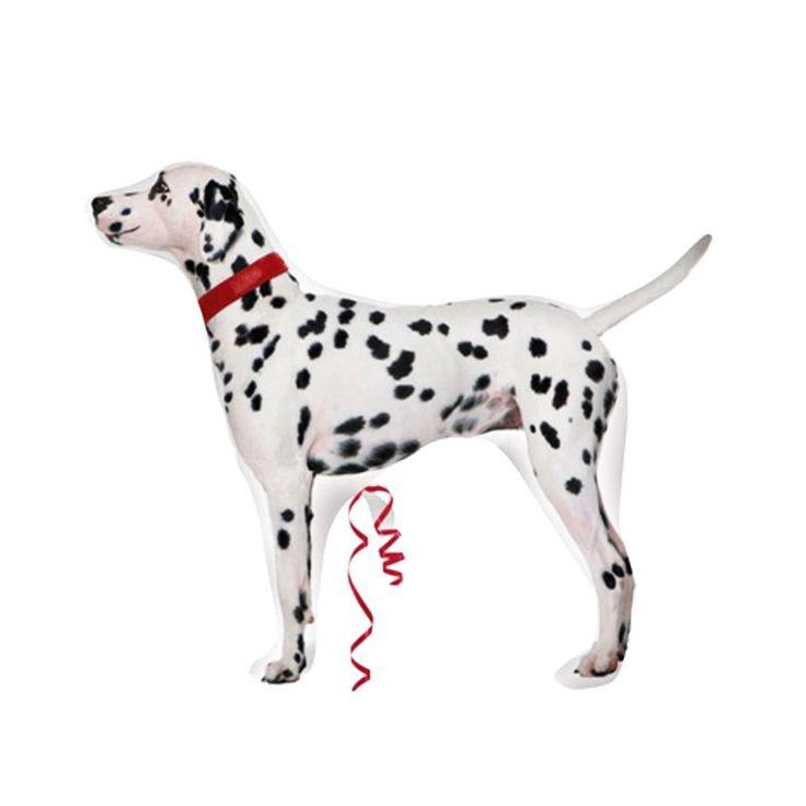 #antalya #balon  Bu benekli ve siyah noktalı güzel köpekler, 101 Dalmatians SuperShape Folyo Balon ismi ile sitemizdeki yerinde sizleri bekliyor.