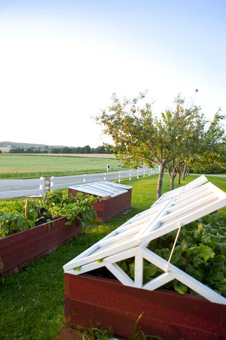 Drivbänkar , köksträdgård, vegetable garden