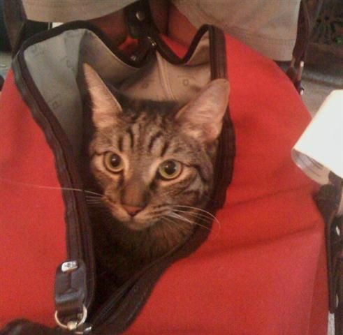 Great tips on flying with pets. Specially in cabin. I have flown with my cat from US to Germany and you really need to make sure all shot are up to date and especially have a chip implanted and certain shots aftewards!