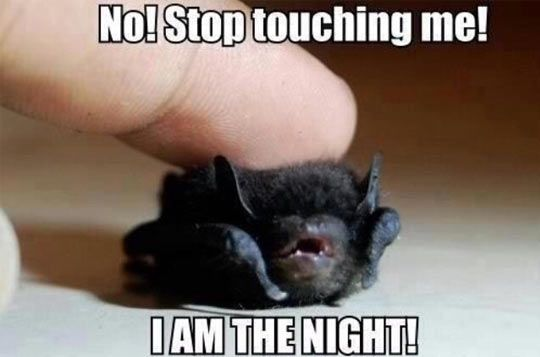 Bat's not how to treat him.