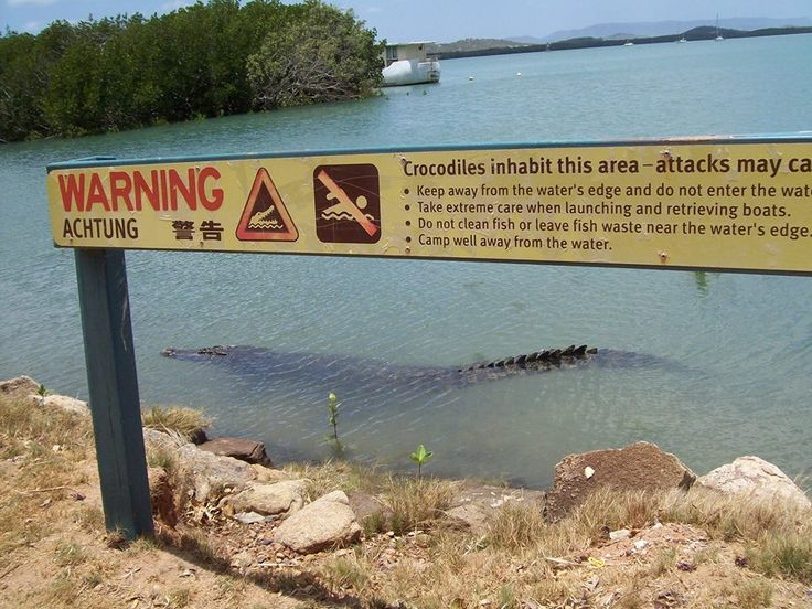 If heading to Cooktown, please don't swim in the Endeavour River: this photo is taken right at the town's Esplanade.  This photo was taken by Council staff member, Pat Wilson. I found it on facebook the day it was posted (6.11.13).