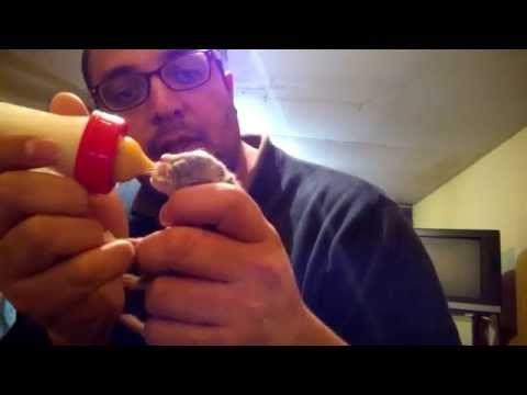Cómo dar biberones a gatitos lactantes - YouTube