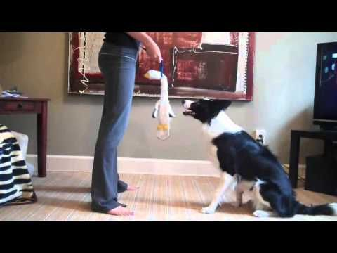 Impulse Control Game For Dogs This is a tutorial on how to play the impulse game for dogs. This game is great for aggressive dogs who are in training, it helps them to be able to focus on their handler while in a high arousal state