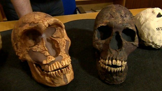 A study of Neanderthal skulls suggests that they became extinct because they had larger eyes than our species.  As a result, more of their brains were devoted to seeing in the long, dark nights in Europe, at the expense of high-level processing.  By contrast, the larger frontal brain regions of Homo sapiens led to the fashioning of warmer clothes and the development of larger social networks.  The study is published in Proceedings of the Royal Society B.