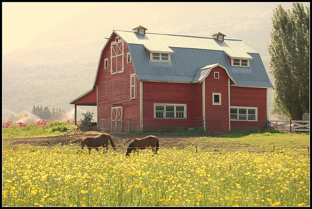 I love the style of these old red barns. Classic. This one is from Chilliwack, BC I grew up there :))